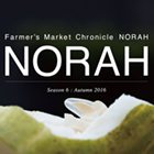 NORAH MARKET - Think and Feel Seed -