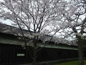 門長屋と桜♪