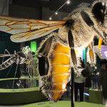 『昆虫』展