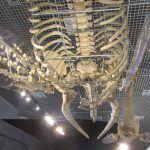 大哺乳類展 2 みんなの生き残り作戦