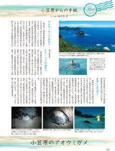小笠原のアオウミガメ