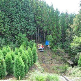 第49回 久万林業まつり