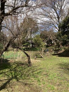 楚人冠記念館。広大な敷地に母屋、茶室、離れがある。