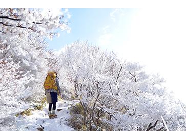 雪さくら 輝く。/雲仙普賢岳にて