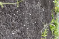 石垣。鑿の跡が見て取れます