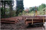 利用するために搬出された間伐材。