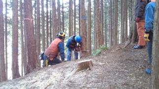 安全な伐木技術の基礎をしっかりと 身につけることが、怪我から身を 守る近道