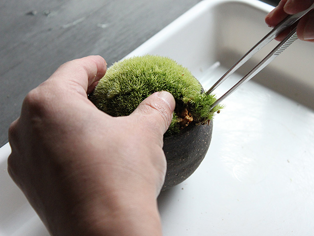 貼った苔を押さえながら差し込む。