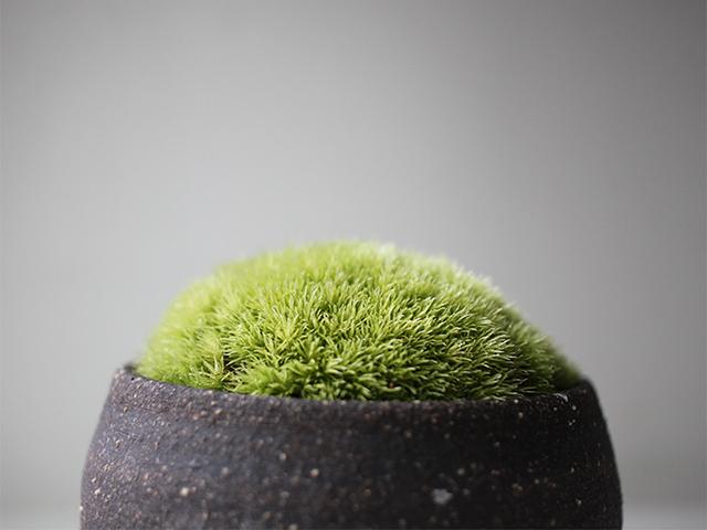 コロンとした苔鉢が出来ました!