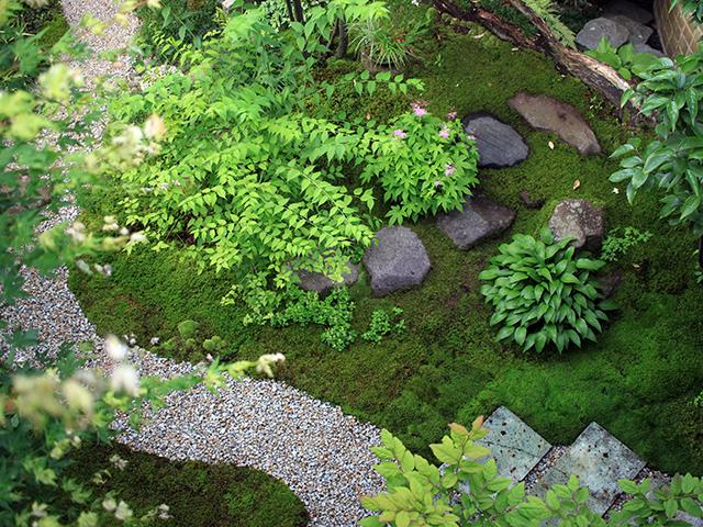 苔庭5年目。貼ったもの、飛び込んできたもの、正確に数えたことはないが30種以上の苔が育っているのでは?