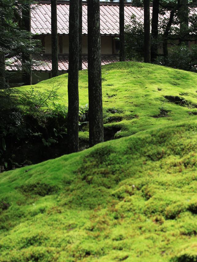 苔と杉と民家。調和の里山。