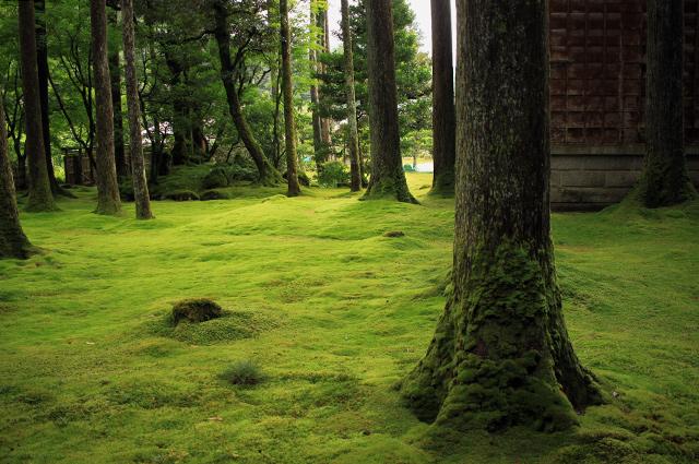 木漏れ日が優しく降り注ぐ。