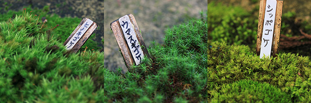 代表的ないくつかの苔には札が立ち違いがわかるように。