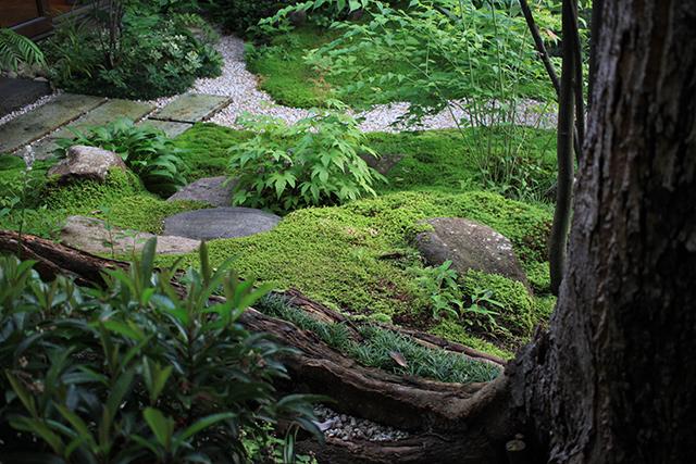 現在の庭。石も苔に覆われつつあり自然な雰囲気に。(2020年7月8日)