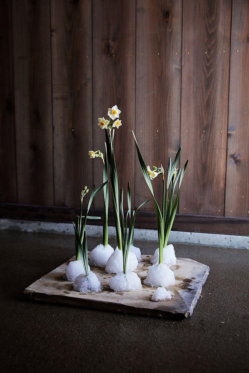 房咲水仙 雪 陶土の板