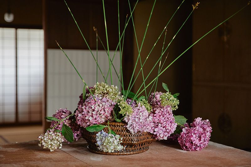 ふとい、紫陽花