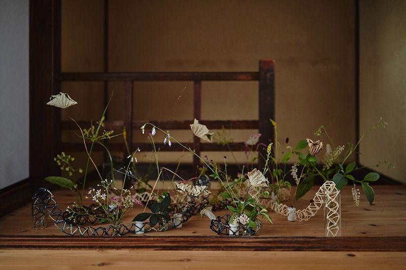 枯蓮 かやつり草 うどの花 洋種山ごぼう