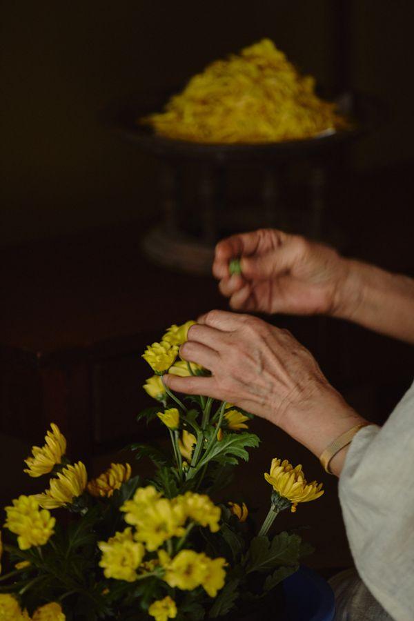 黄菊 かんざし