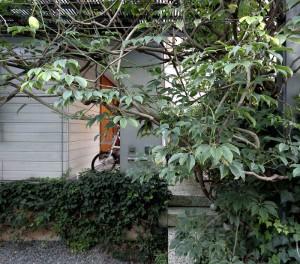 緑のカーテン越しに壁柱とポーチをみる