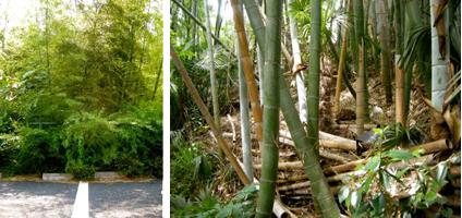 こちらは何となく殺伐とした竹薮で、身の危険すら感じる不穏な空気を漂わせていたり、あるいはフェンスをくぐって駐車場に侵入したりしています。