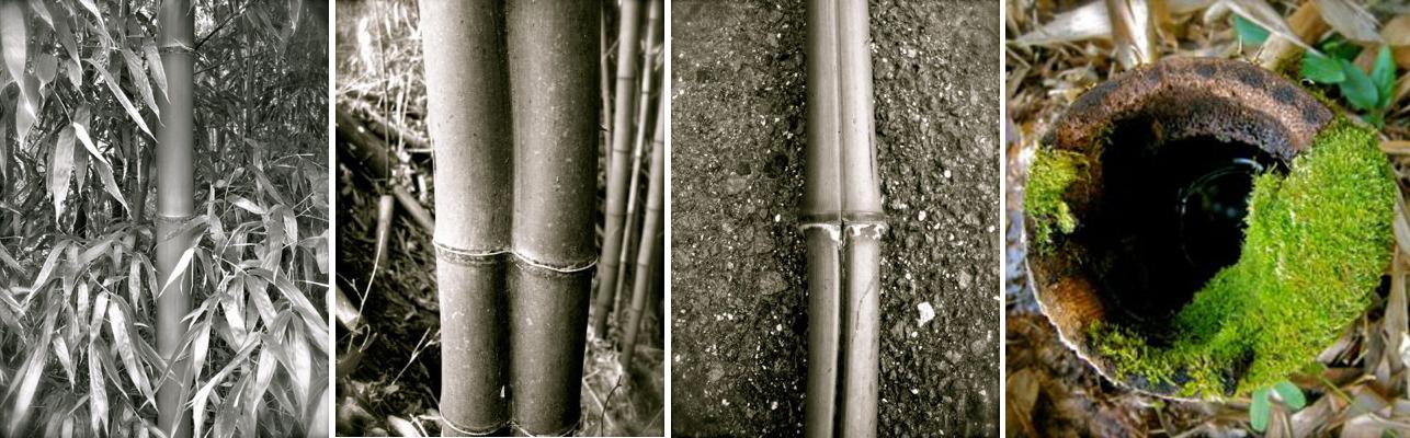 左から 傷のない綺麗なマダケ/かわった形の竹は花入れなどに/実竹(ジッチク)と呼ばれる肉厚の竹/竹林に残る苔むした切り株