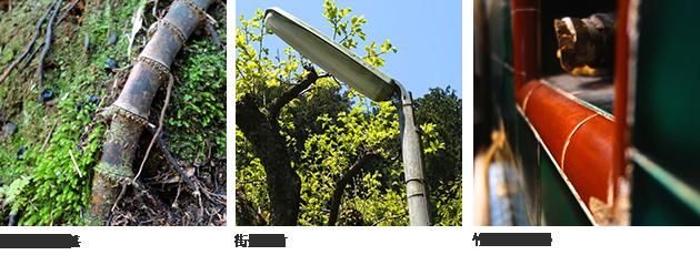 (左)地表の地下茎 (中央)街灯に竹 (右)竹割りタイル