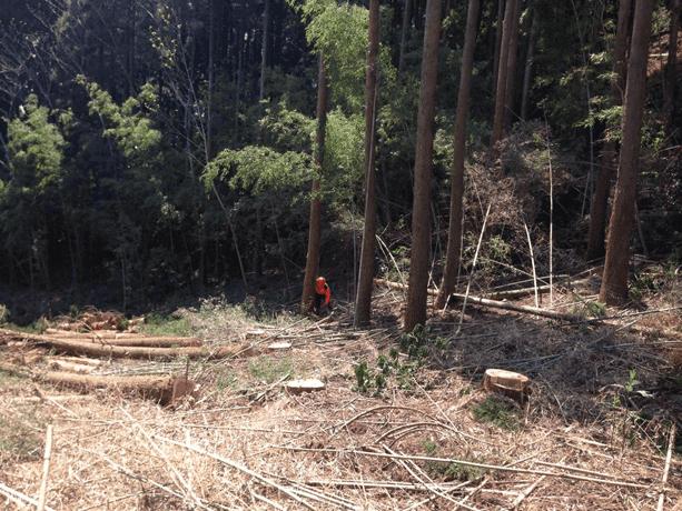 杉はいつ伐るのか