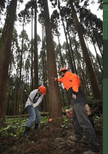 施主さんも伐採作業に参加します