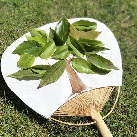 ワークショップ「うちわに木を咲かせよう」