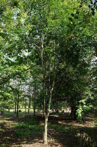 庭木を探す