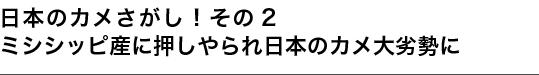 日本のカメさがし!その2 ミシシッピ産に押しやられ日本のカメ大劣勢に