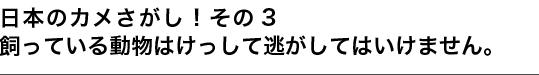 日本のカメさがし!その3 飼っている動物はけっして逃がしてはいけません。