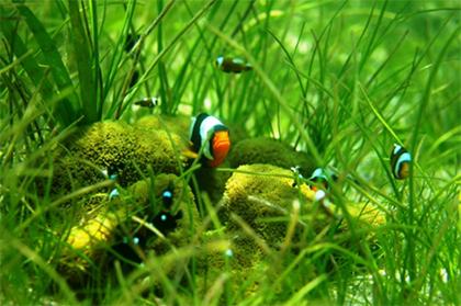 埋め立てられる海域の生き物たち(有光智彦氏提供)