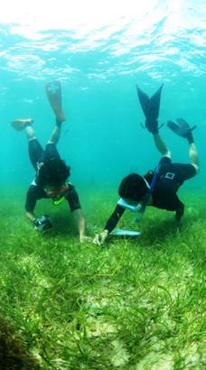 ジュゴンのはみあとを調査する市民たち(日本自然保護協会提供)