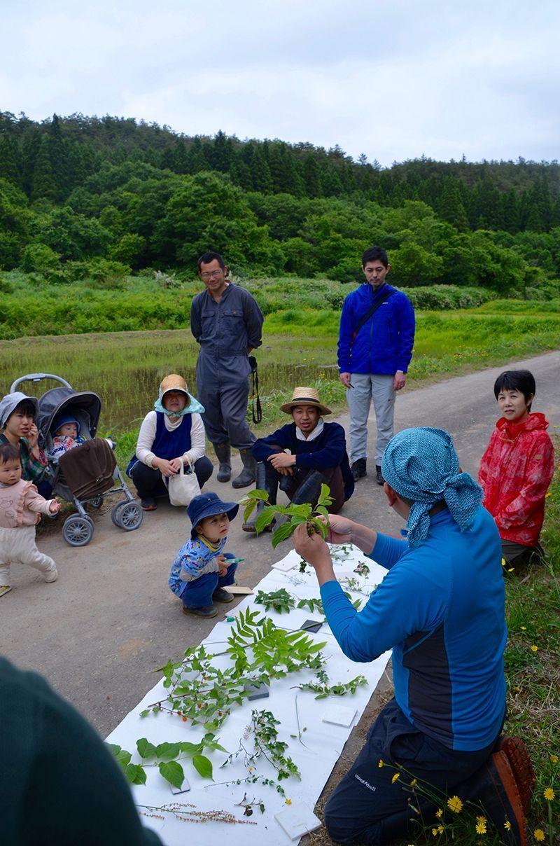 身の回りにどんな植物があるのか知りたくて、植物生態学者の伊藤浩二さんと歩いて8年になる。