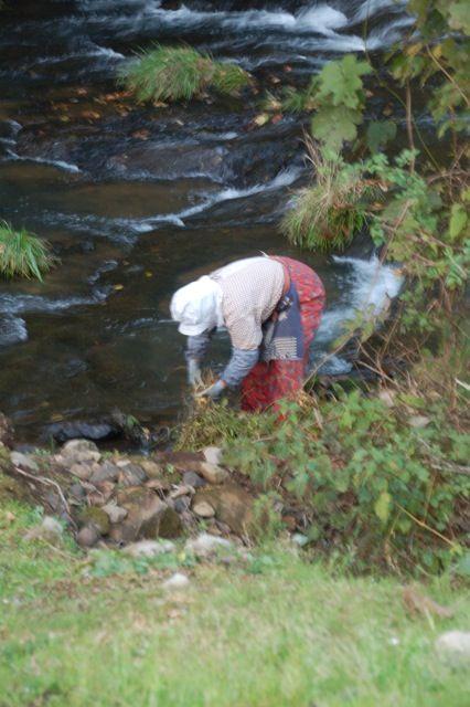 干す前に川で小豆の根を洗えば作業途中に豆が汚れないと集落のばあちゃん達が教えてくれた。