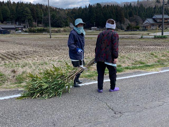 刈った竹に縄をかけおしゃべりしながら運んでいるばあちゃんたち。