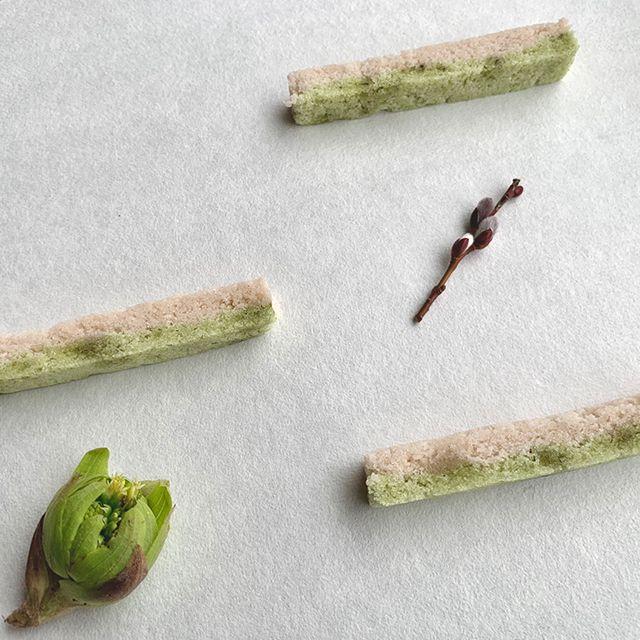 土の中から顔を出す蕗の薹の香りを生〆に。