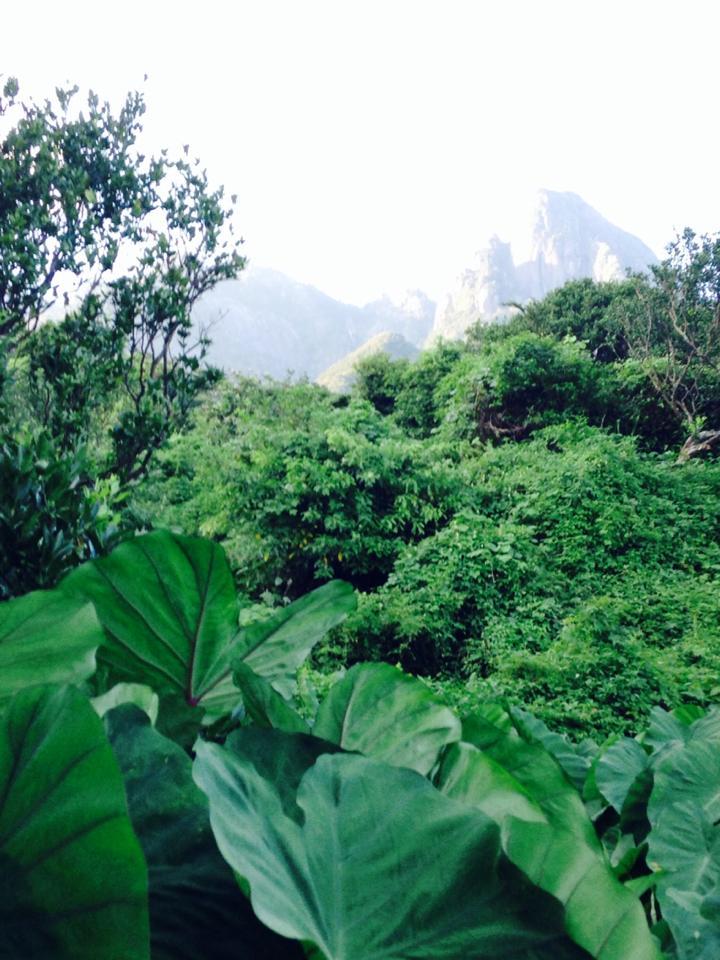 山の気配濃密なポンカンとタンカン畑