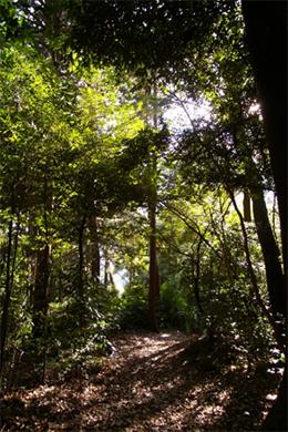 大和高原、某集落の聖域へつながる山道。心の最奥にある宝物を、私たちは守ることができるのだろうか。