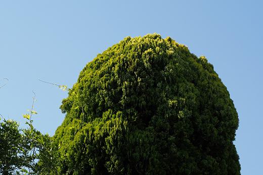 シンボルツリーとなる大きな木があります