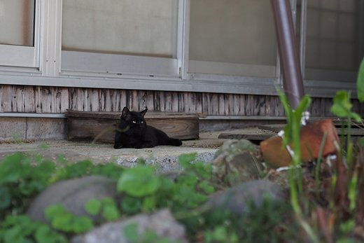 猫がお昼寝しています