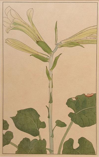 杉浦非水『百花譜』(1920年)より