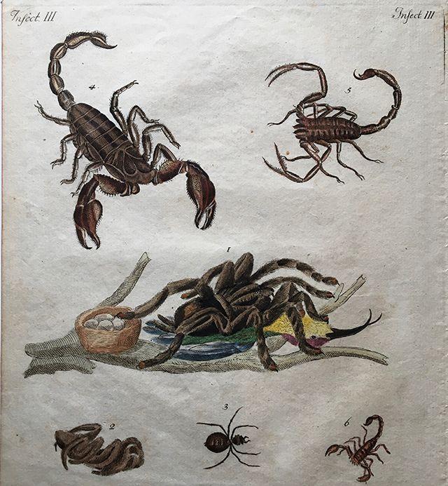 「南国の危険な昆虫」のページ