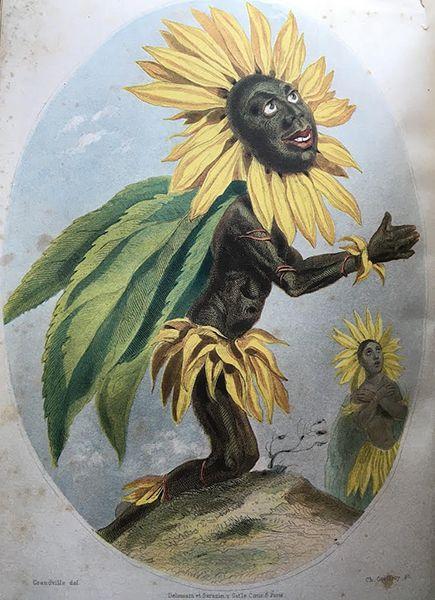 グランヴィルのひまわり。1857年のゴネ出版社からの初版後刷。