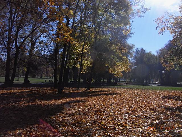 開業時にお世話になった方々がいらっしゃる街なのに、ずっと再訪できていない ミュンヘン。大好きな英国庭園(エングリッシャーガルテン)の秋の景色(数年前)。