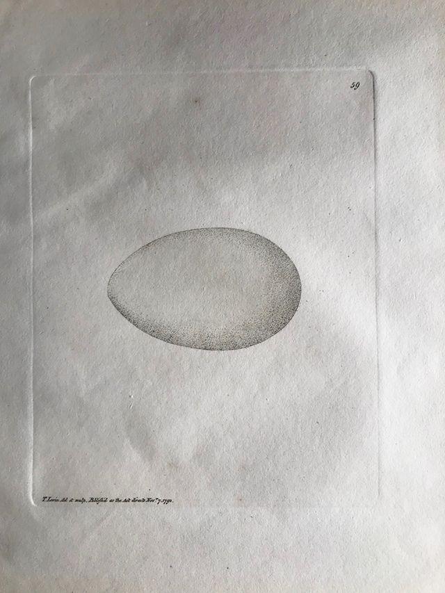 ルーウィン『イギリスの鳥類とその卵』第二版(1793年)の卵の図譜