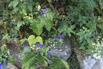 ベニシアさんの庭